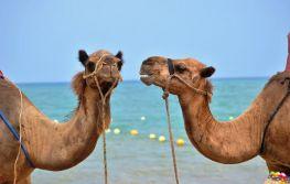 Vikend u Marrakechu
