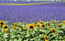 Provansa i najljepša sela Francuske