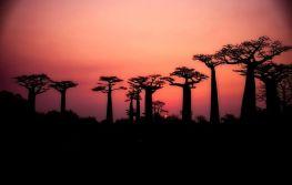 Tanzanija, safari i Zanzibar 10 dana